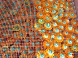 Calendula flowers drying