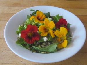 Two colors of nasturtium flowers on a fresh garden salad.