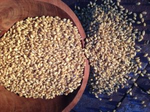 Heirloom White Sonoran Wheat berries, local, organic, traditional, from BKWFarms (MABurgess photo)