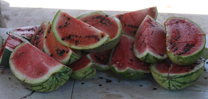 Refreshing and prolific are Mayo Indian watermelon (photo from Mission Garden)