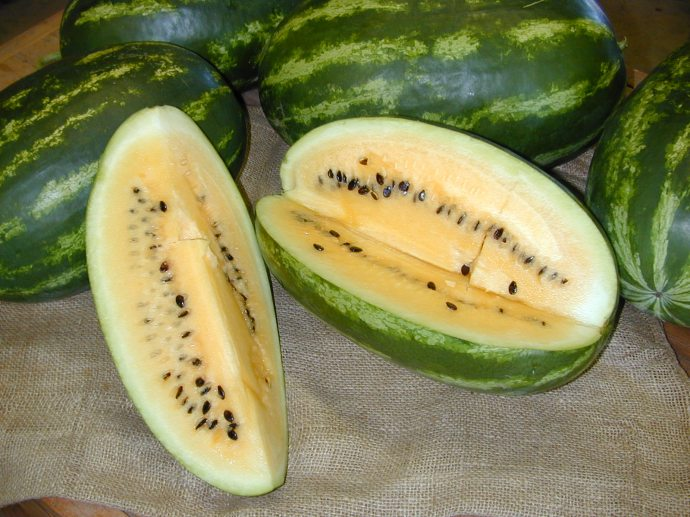 Unique rich flavor, color, and hot-weather-hardy--that's Tohono O'odham yellow watermelon
