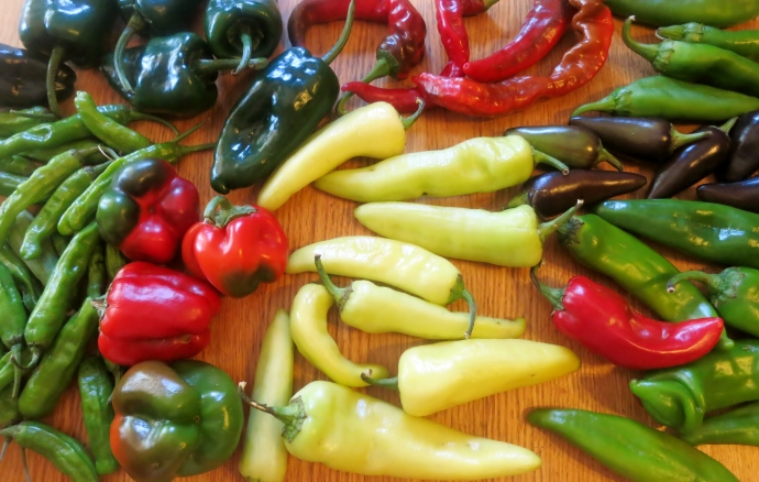 late summer is chile season at Tucson CSA, Walking J, Santa Cruz Farmers' Market Consignment