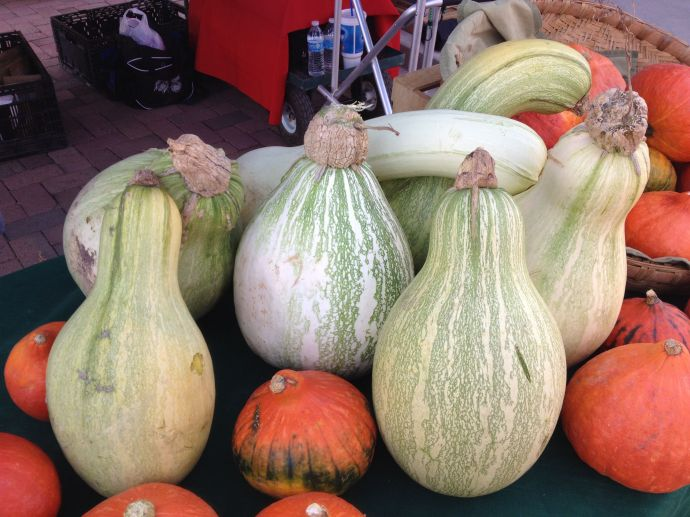 Tohono O'odham Ha:l and curry pumpkins at SanXavierCoop booth, SantaCruz Farmers Market (MABphoto)