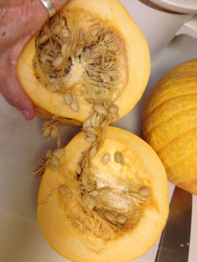 Rich flesh and seed of Tarahumara pumpkin (MABphoto)