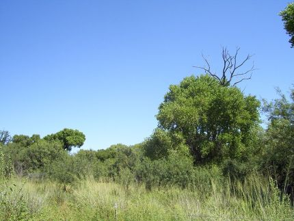 Empire_Ranch_Arizona_Cienega_Creek_Cottonwoods_September_2007