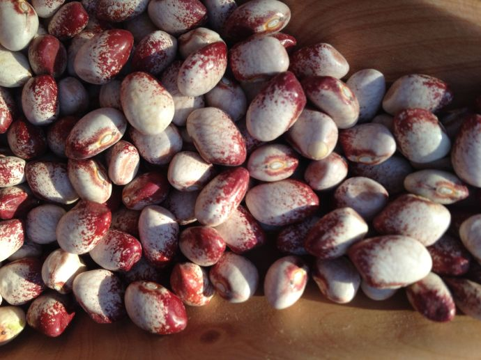 """Colorado River bean"" takes its name from the Colorado Plateau where it is grown.  This small speckled bean makes a wonderfully creamy soup."