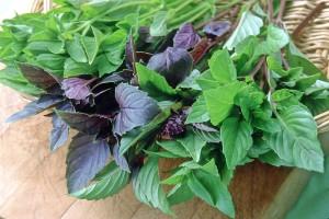 basil-trio_renees garden_1