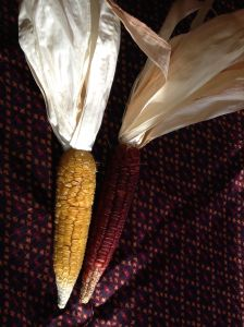 Red Sweet Corn, from the Guarijio People of southern Sonora--note the wrinkly kernels indicating sweetness.  (Available through NativeSeeds/SEARCH)