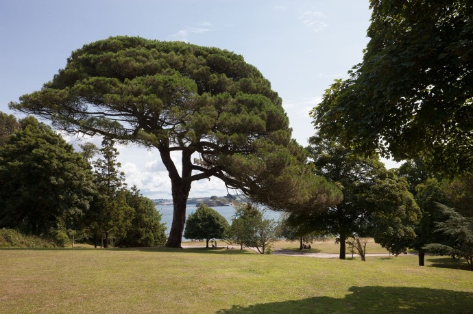 pine 419642_1280