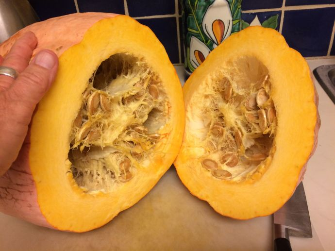 OPEN NSS NAVAJO BANANA SQUASH FOR AN EXPLOSION OF BETA-CAROTENES!