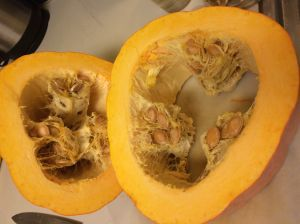 Navajo banana squash showing its interesting pattern of seeds inside