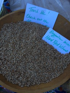 Organic hard red wheat--perfect for Christmas cookies and cakes