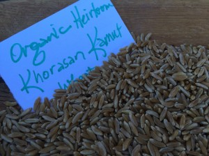 Organic Khorasan Kamut wheat--great for bread baking