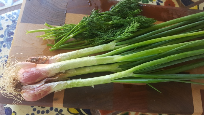 I'itoi onions and dill.