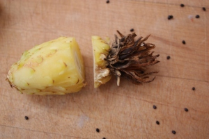 ferocactus fruit 1099
