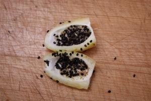 ferocactus fruit 1105