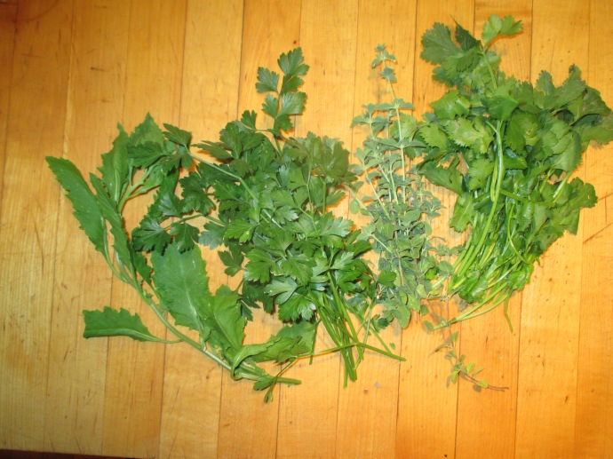 Herbs for Mole Verde from left: epazote, parsley, oregano, and cilantro.