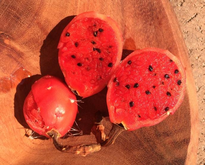 Sliced octopus cactus fruit on palo chino bowl (MABurgess photo)
