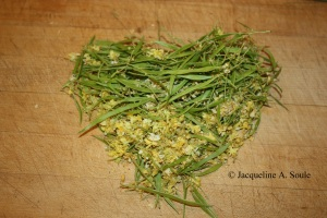 palo verde flowers 1702858