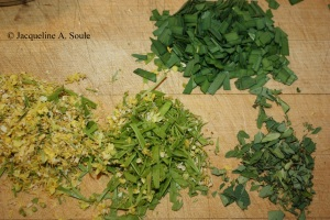 palo verde flowers 1702869